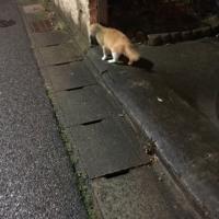 猫三昧 Cat-loving - 外猫 : もっとモザイク more pixelated
