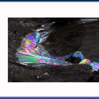 氷のシンクロナイズドスイミング