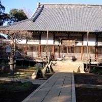 野田 金乗院の冬牡丹