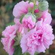 ピンクのお花 etc♪