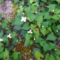 5月20日の花