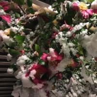 2017 初雪