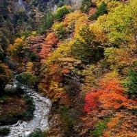 高瀬渓谷紅葉