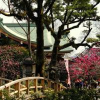 東風吹かば 匂い起こせよ 梅の花…-京都市上京区:北野天満宮