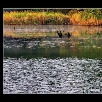 五色沼の夜明け
