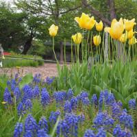 百合が原公園 2017年5月その1