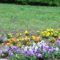 花壇のカモ