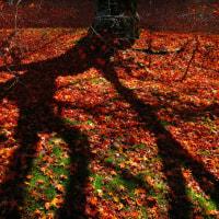 「掴む影」 いわき 夏井川渓谷にて撮影! 楓の落ち葉
