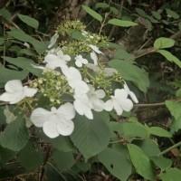 吉和冠山で出会った花