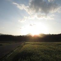 草競馬前の公園 & 輝く麦の穂 by 空倶楽部 おまけに「疾走するクロ」