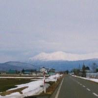 大雪山の春。。。