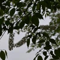 木の新芽や花がきれい