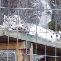 初冬の多摩動物公園もいいものだ