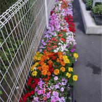 町内の花壇整備
