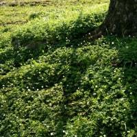 山野草の丘