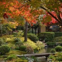 晩秋の京都散策
