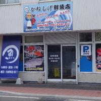 土曜は「ハグの日」!?あっ「フグの日」です!北海道「真フグ」・「トラフグ」!!そして……「ヒラマサさん」☆彡発寒かねしげ鮮魚店の魚屋しげです。