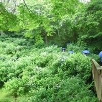 雨の仙台市野草園