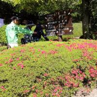 万博公園の日本庭園散策 2017-4-23