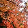 秋を飛び越えて冬でした