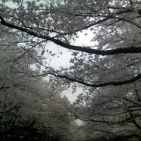 花見。日本は平和!