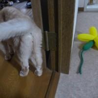 後編)ネコは当惑気味