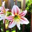 近所の花模様。 7/19