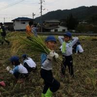 稲刈り 2016