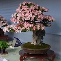 サツキフェスティバルの花たち