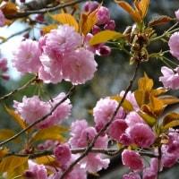 17年4/29~上松町~隠れ滝~②