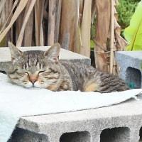 地域猫の世話、町内会で