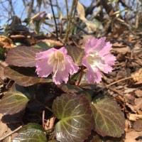 Fwd: 二上山の春