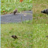 小雨の鳥さんぽ