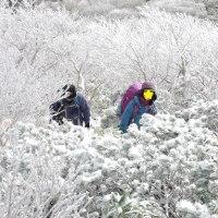 樹氷の花畑 ~ ホロホロ山&徳舜瞥山 と プチナイヤガラ
