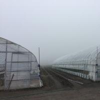 すごい霧。