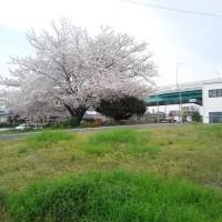 4月9日(日) 職場の桜、アルトワークス、80年代の洋楽(その2)