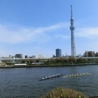 荒川 チューリップ~隅田川 早慶レガッタ
