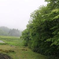 今日の天気 雨 久しぶり 恵みの雨です。