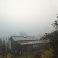 濃い霧の朝