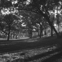 11月の散歩 2