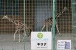 再び、桐生が岡動物園へ!