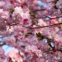 春の名残を訪ねて~♪