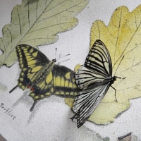 Butterflies on the paper
