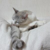 ネコと削り節の日