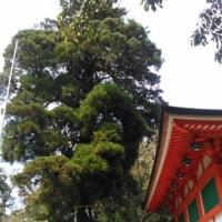 パワースポット(石上神宮)