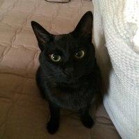 黒猫すばる の 言うことにゃ