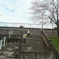 ハッピーショッピング と 満開の桜(兵庫県小野市役所前)