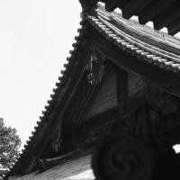 菜の花に見送られて-兵庫県姫路市:書写山圓教寺