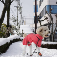 ●クッキー 初めての雪遊び