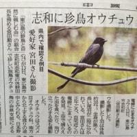 志和に珍鳥オウチョウ(2017年5月16日中国新聞より)